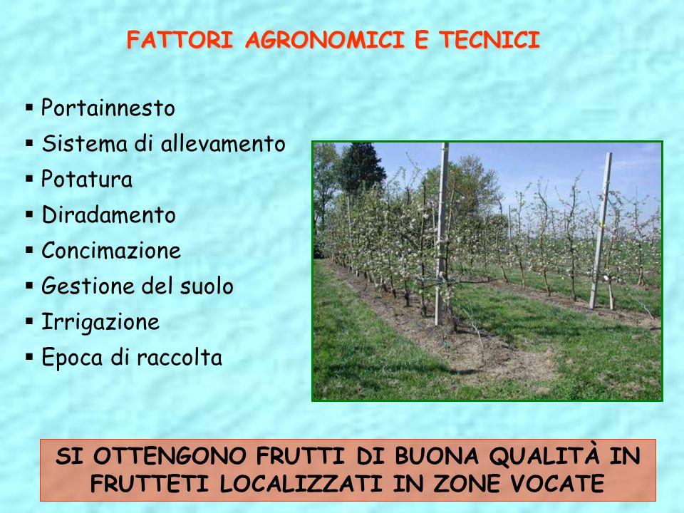 FATTORI AGRONOMICI E TECNICI