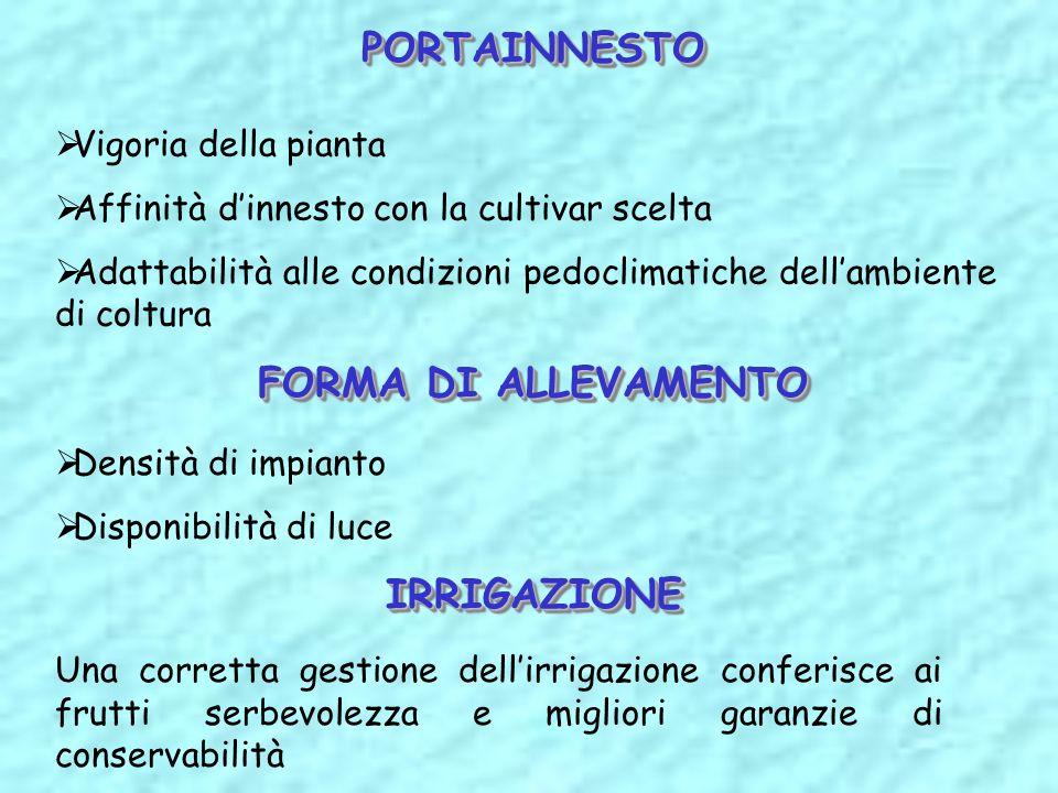 PORTAINNESTO FORMA DI ALLEVAMENTO IRRIGAZIONE