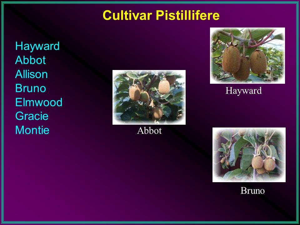 Cultivar Pistillifere
