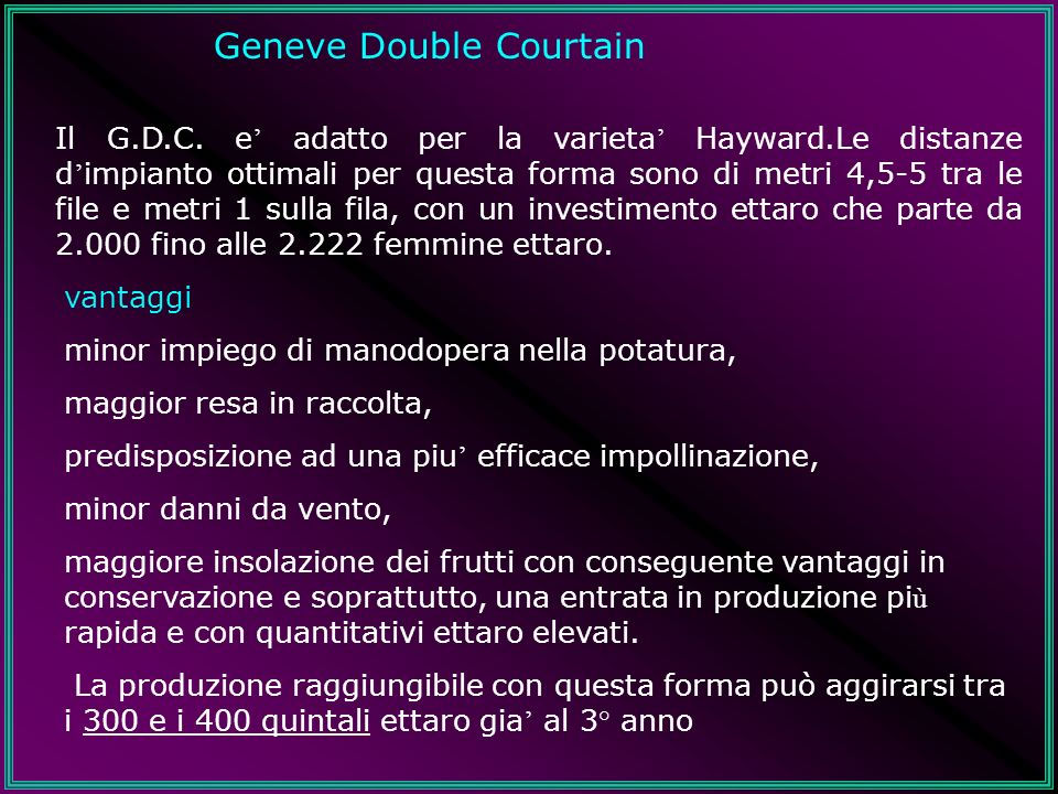 Geneve Double Courtain