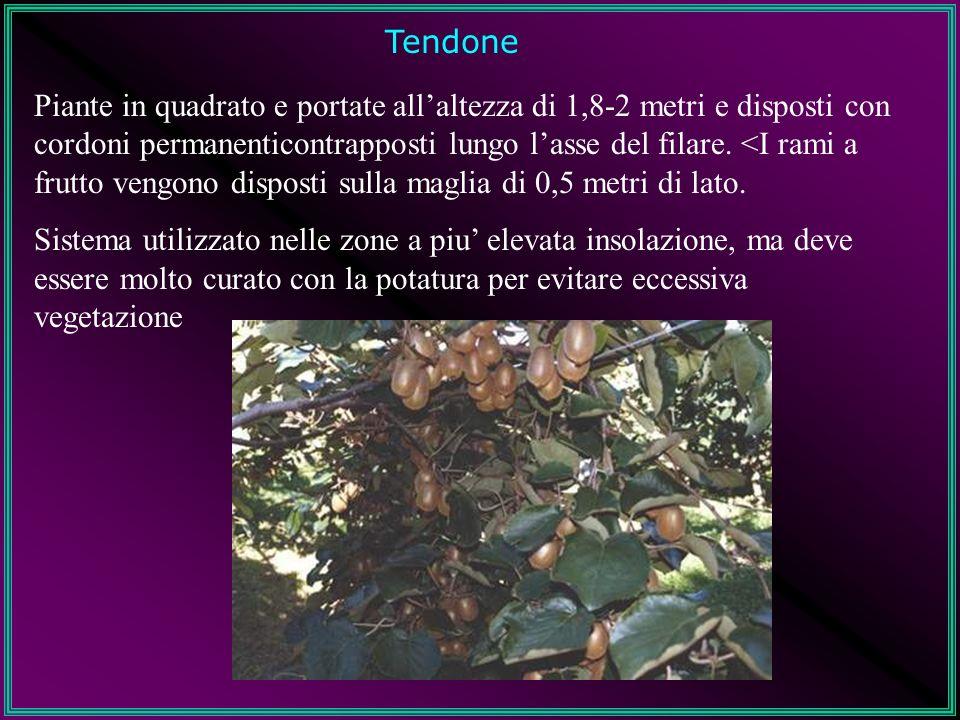Tendone