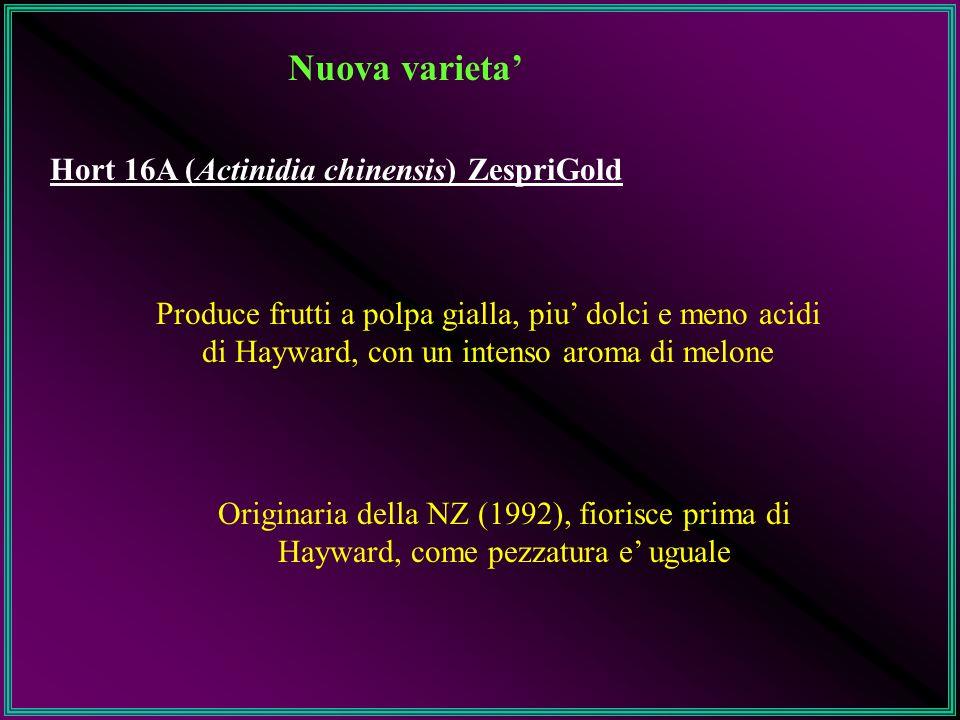 Nuova varieta' Hort 16A (Actinidia chinensis) ZespriGold