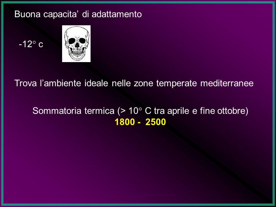 Sommatoria termica (> 10° C tra aprile e fine ottobre)
