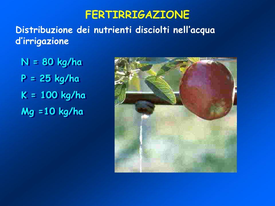 FERTIRRIGAZIONEDistribuzione dei nutrienti disciolti nell'acqua d'irrigazione. N = 80 kg/ha. P = 25 kg/ha.