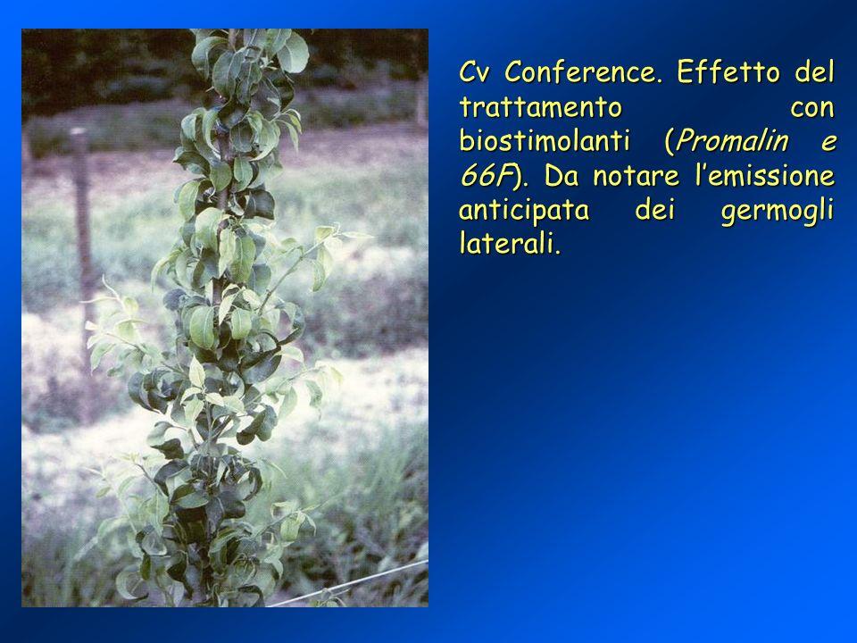 Cv Conference. Effetto del trattamento con biostimolanti (Promalin e 66F).