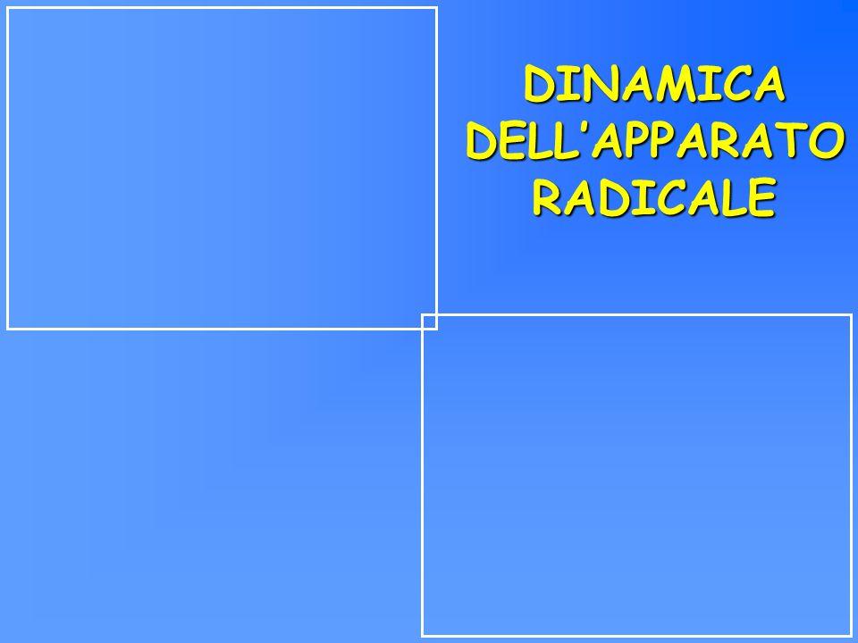 DINAMICA DELL'APPARATO RADICALE