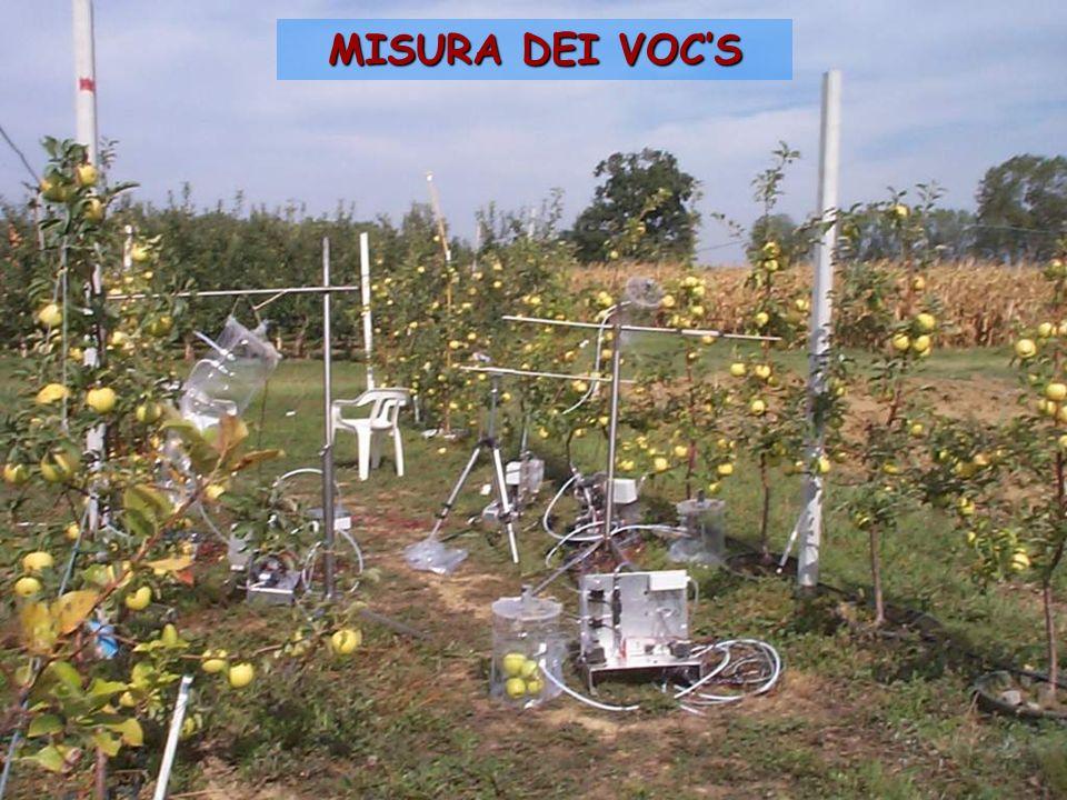 MISURA DEI VOC'S