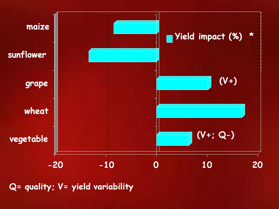 maize Yield impact (%) * sunflower (V+) grape wheat (V+; Q-) vegetable