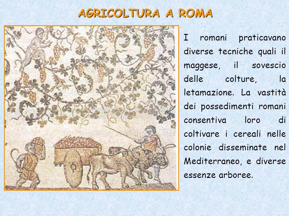 AGRICOLTURA A ROMA