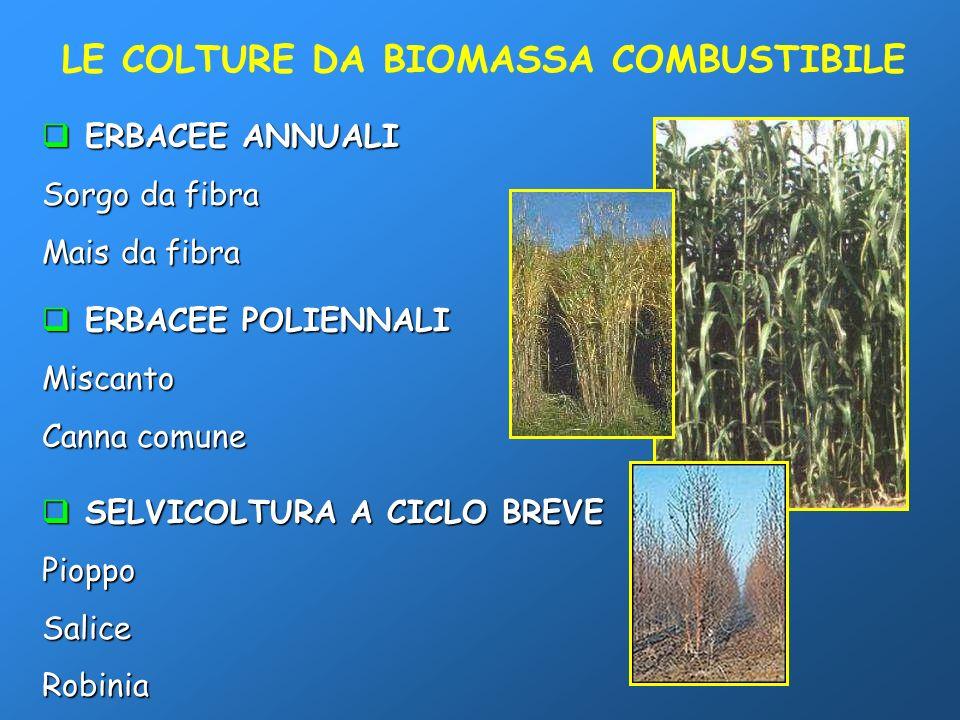 LE COLTURE DA BIOMASSA COMBUSTIBILE