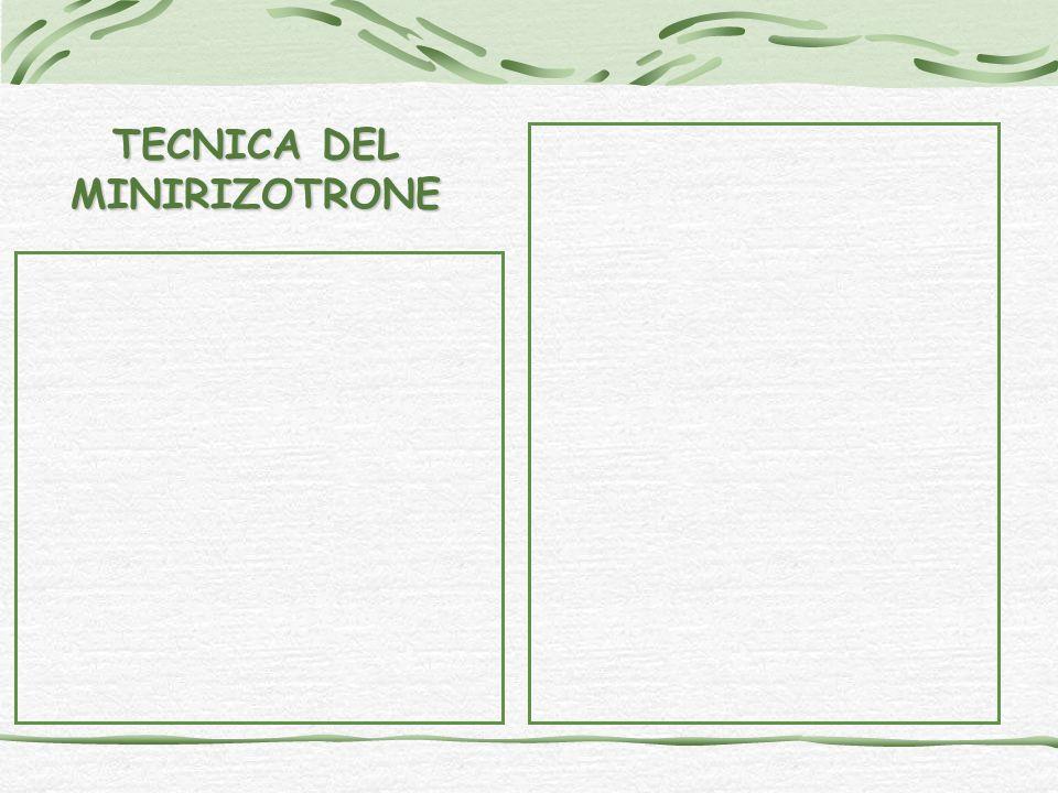 TECNICA DEL MINIRIZOTRONE