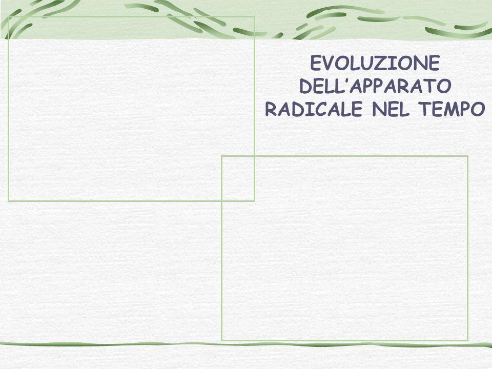 EVOLUZIONE DELL'APPARATO RADICALE NEL TEMPO