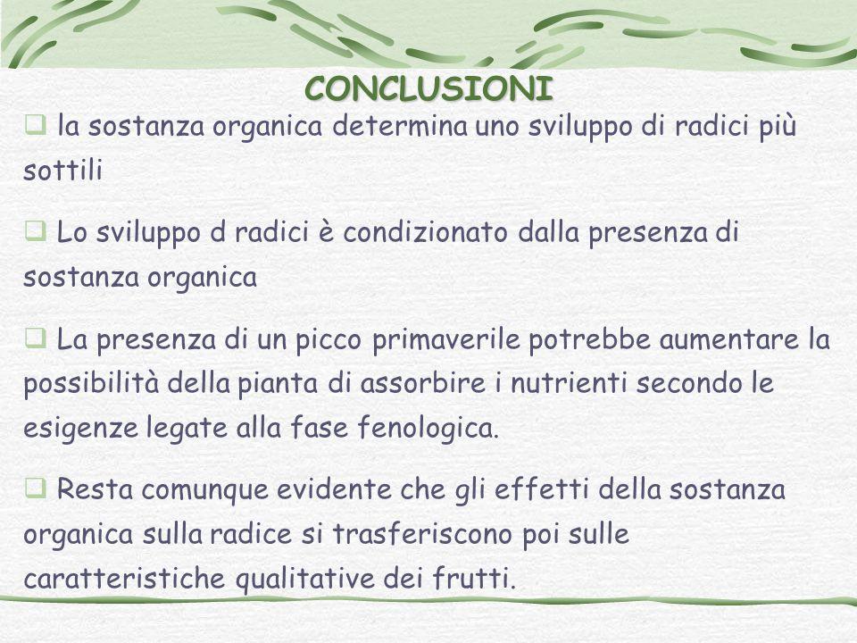 CONCLUSIONI la sostanza organica determina uno sviluppo di radici più sottili.