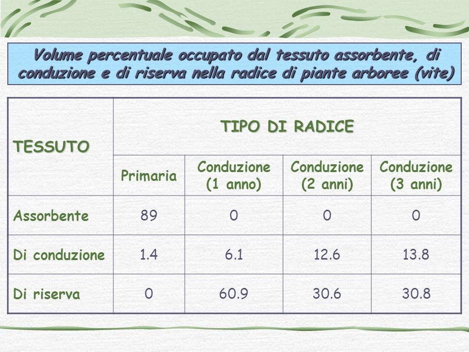 Volume percentuale occupato dal tessuto assorbente, di conduzione e di riserva nella radice di piante arboree (vite)