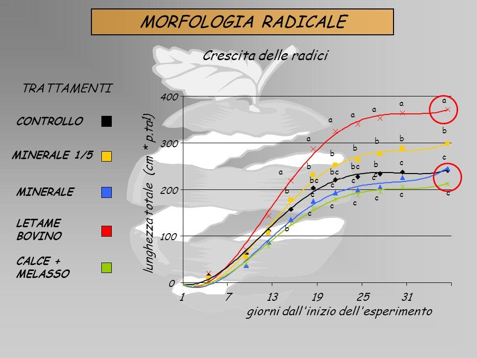 MORFOLOGIA RADICALE Crescita delle radici TRATTAMENTI ) -1