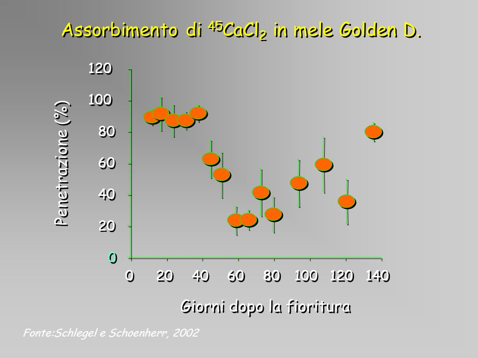 Assorbimento di 45CaCl2 in mele Golden D.