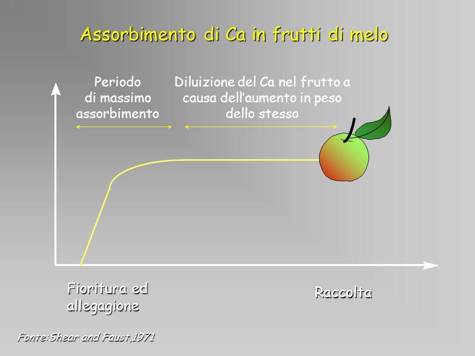 Assorbimento di Ca in frutti di melo