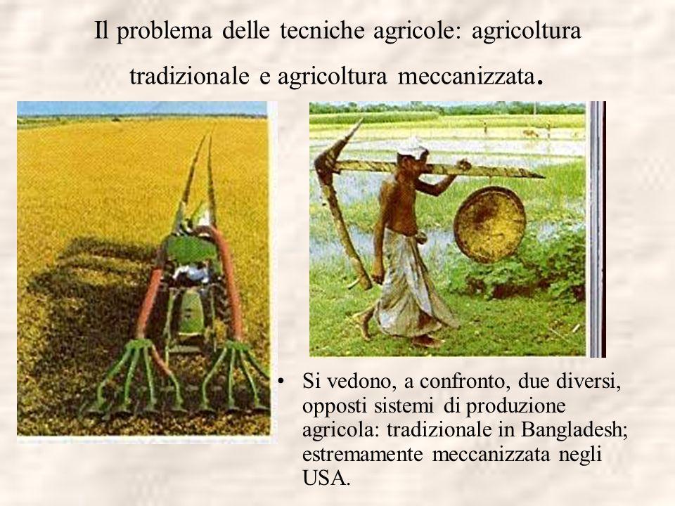 Il problema delle tecniche agricole: agricoltura tradizionale e agricoltura meccanizzata.