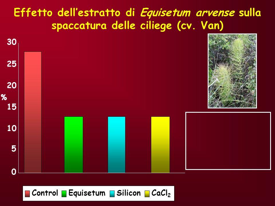 Effetto dell'estratto di Equisetum arvense sulla spaccatura delle ciliege (cv. Van)