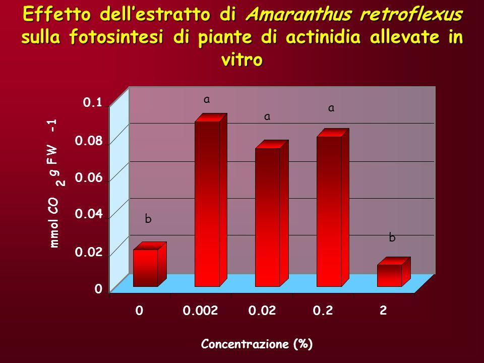 Effetto dell'estratto di Amaranthus retroflexus sulla fotosintesi di piante di actinidia allevate in vitro