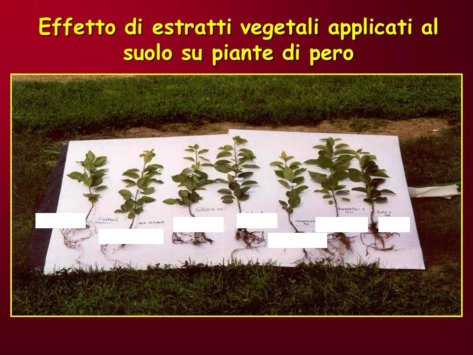 Effetto di estratti vegetali applicati al suolo su piante di pero
