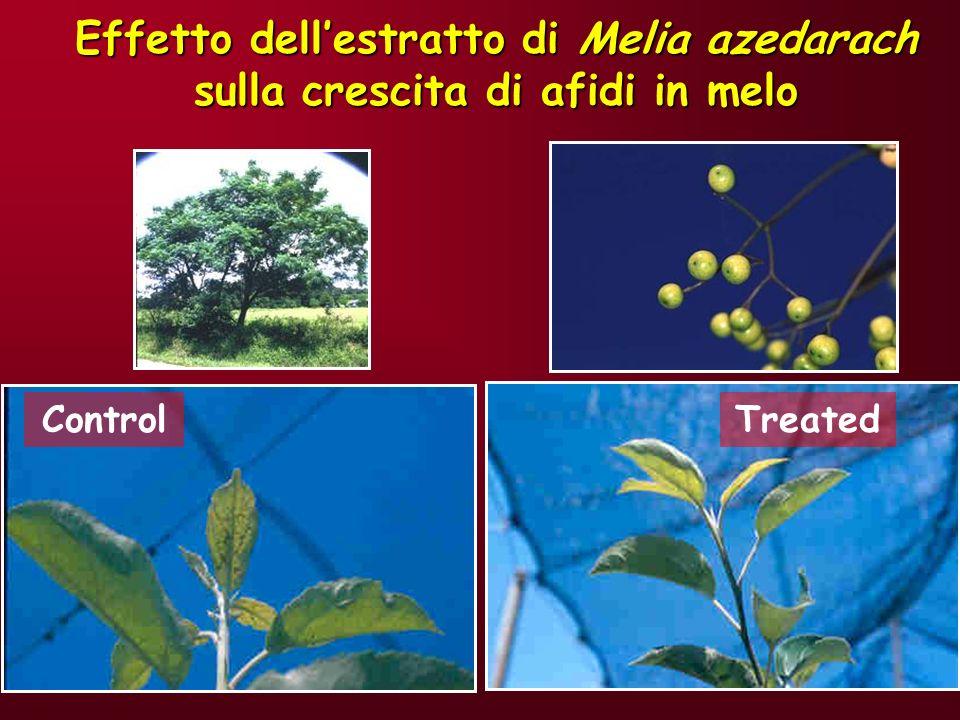 Effetto dell'estratto di Melia azedarach sulla crescita di afidi in melo