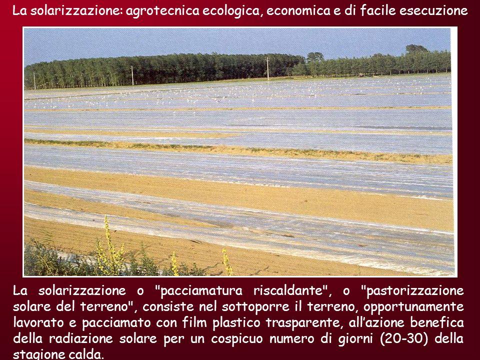 La solarizzazione: agrotecnica ecologica, economica e di facile esecuzione