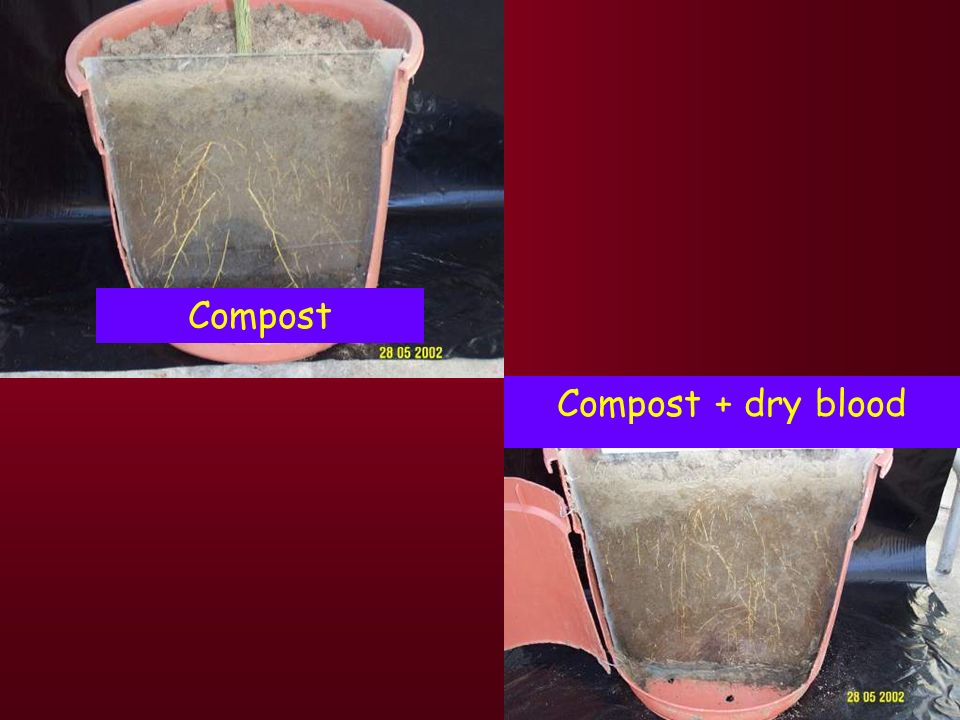 Compost Compost + dry blood