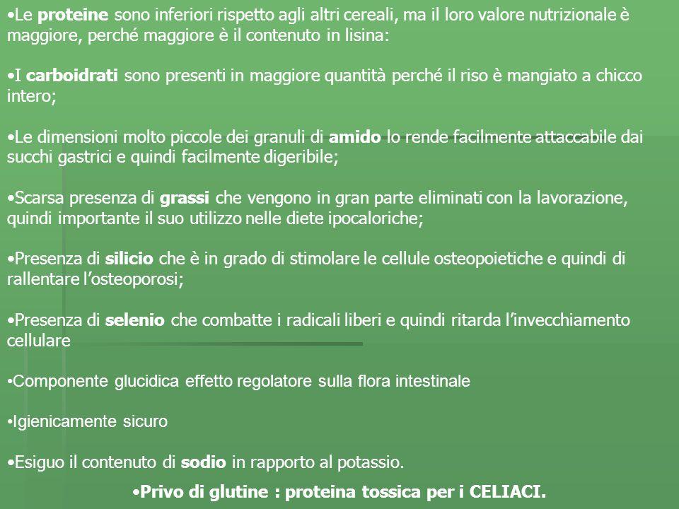 Privo di glutine : proteina tossica per i CELIACI.