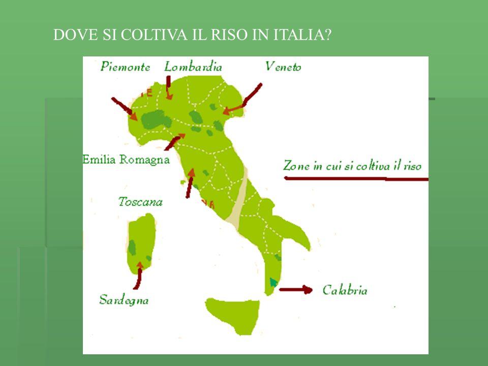DOVE SI COLTIVA IL RISO IN ITALIA