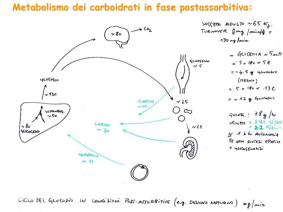 Metabolismo dei carboidrati in fase postassorbitiva: