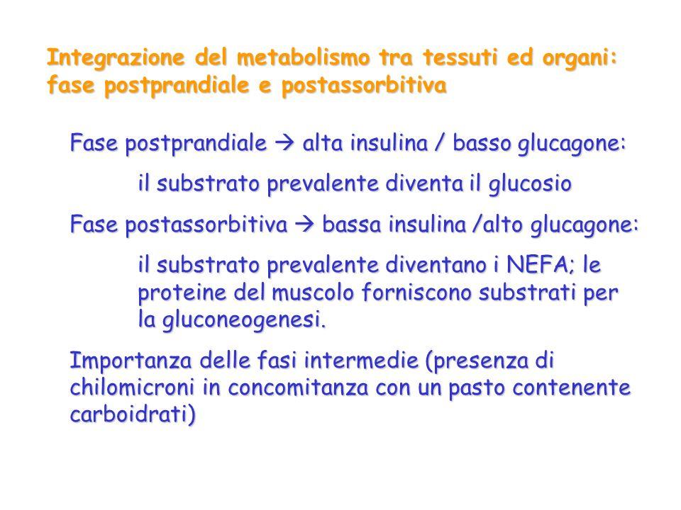 Integrazione del metabolismo tra tessuti ed organi: fase postprandiale e postassorbitiva