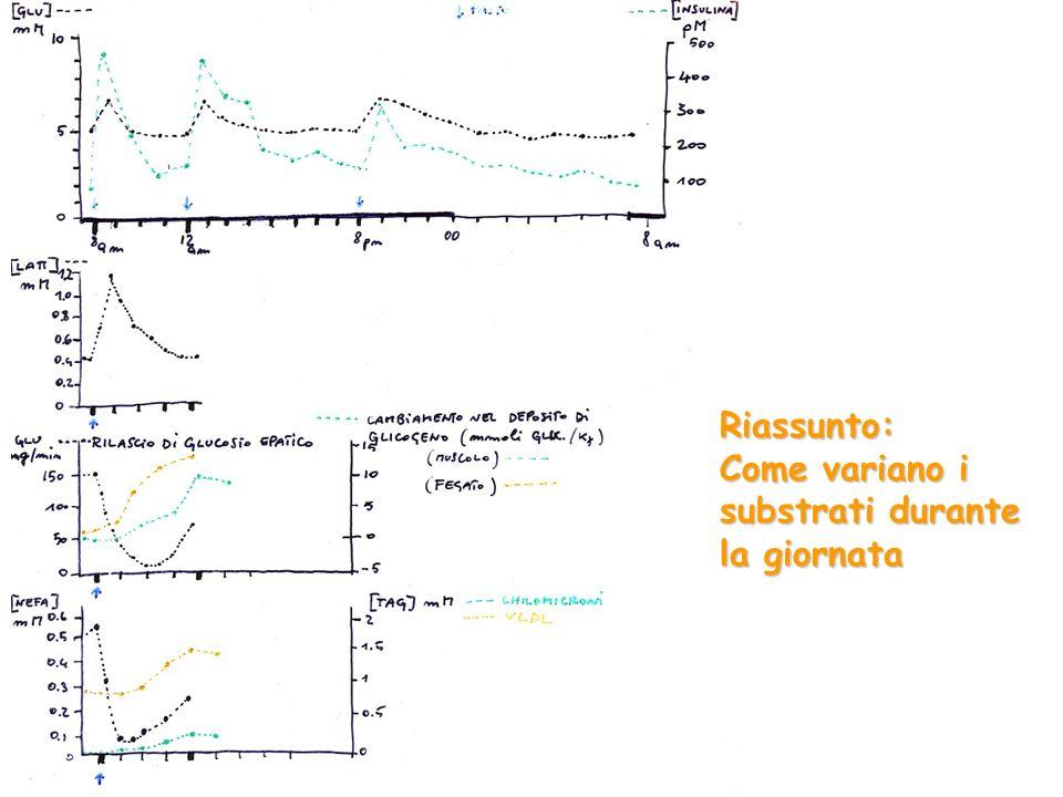 Riassunto: Come variano i substrati durante la giornata