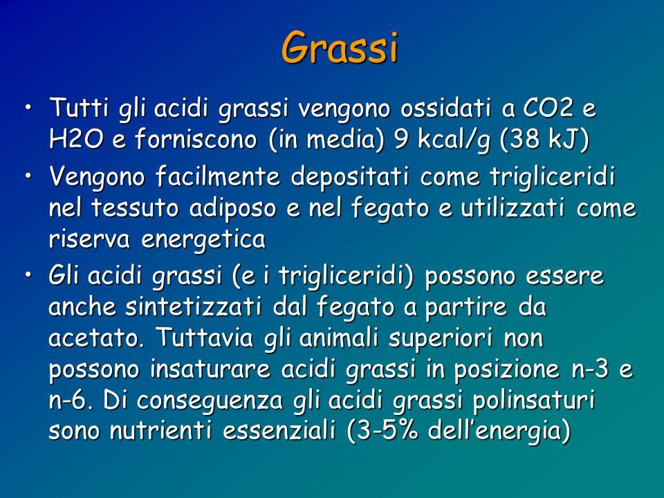 Grassi Tutti gli acidi grassi vengono ossidati a CO2 e H2O e forniscono (in media) 9 kcal/g (38 kJ)