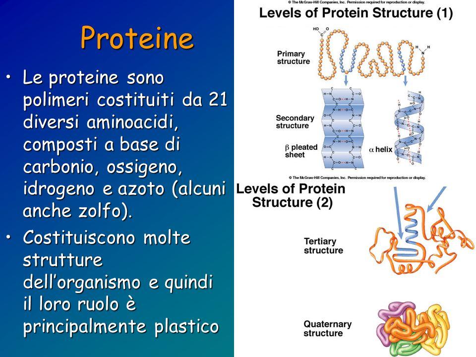 Proteine Le proteine sono polimeri costituiti da 21 diversi aminoacidi, composti a base di carbonio, ossigeno, idrogeno e azoto (alcuni anche zolfo).
