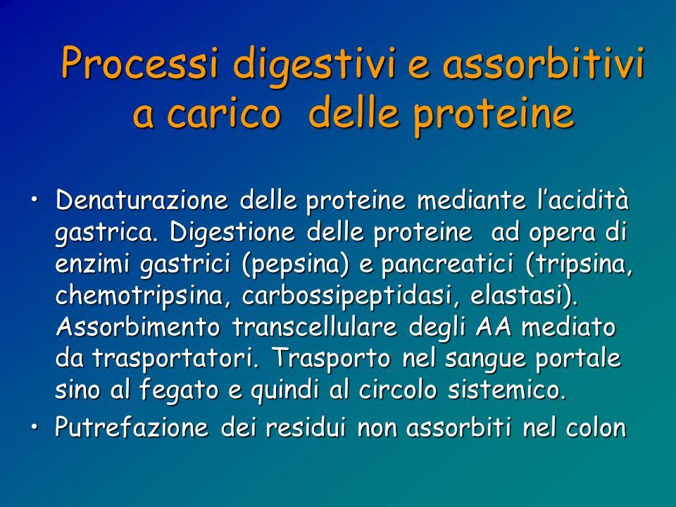 Processi digestivi e assorbitivi a carico delle proteine