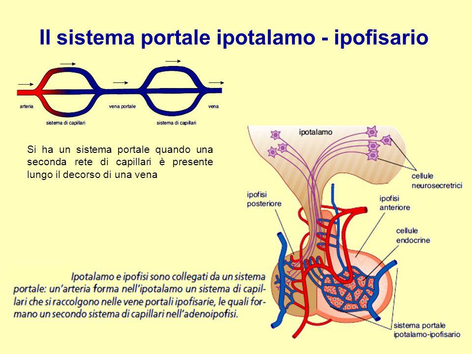 Il sistema portale ipotalamo - ipofisario
