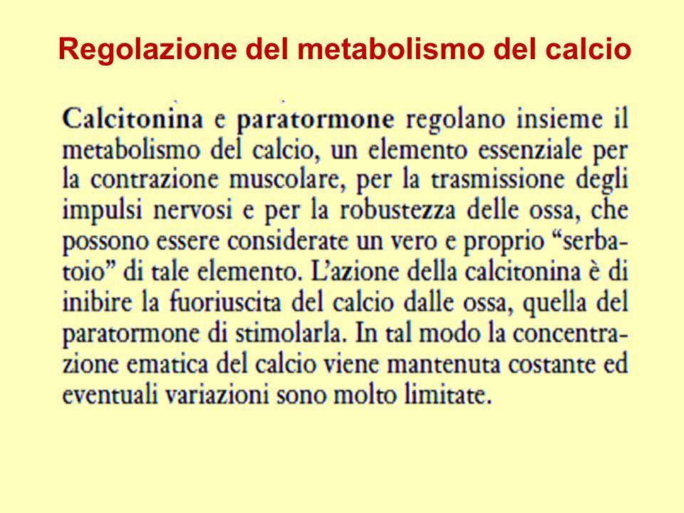 Regolazione del metabolismo del calcio