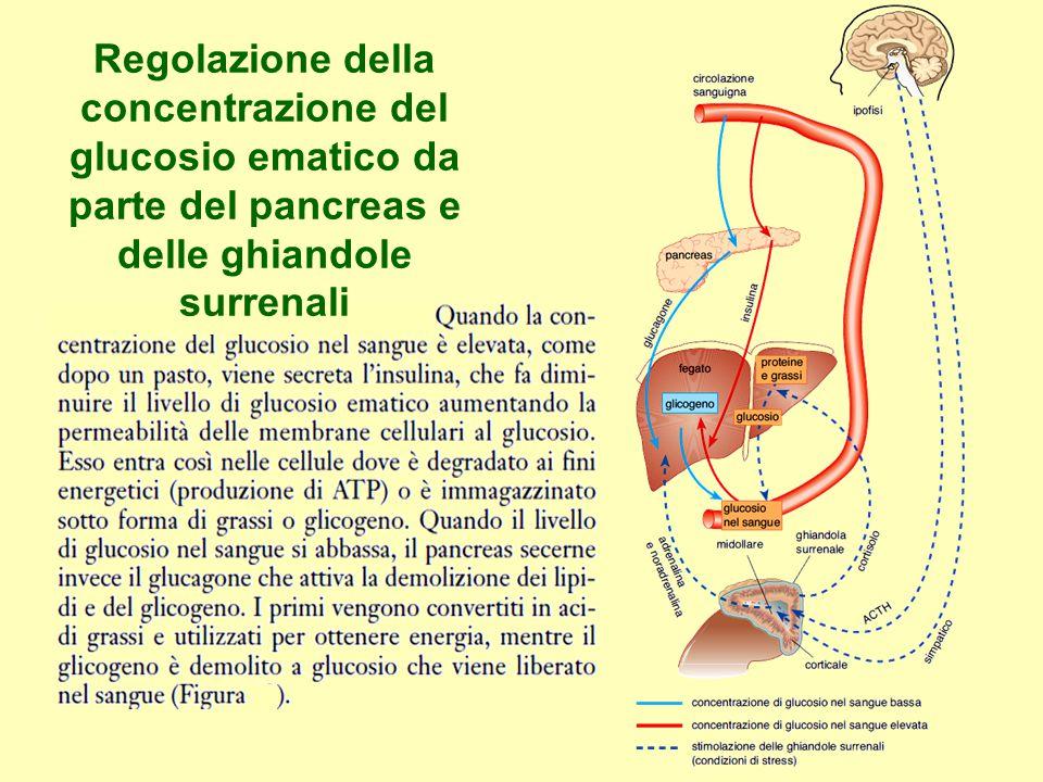 Regolazione della concentrazione del glucosio ematico da parte del pancreas e delle ghiandole surrenali