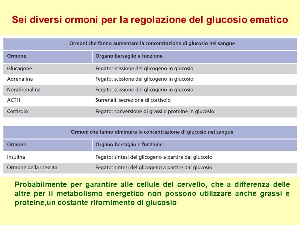 Sei diversi ormoni per la regolazione del glucosio ematico