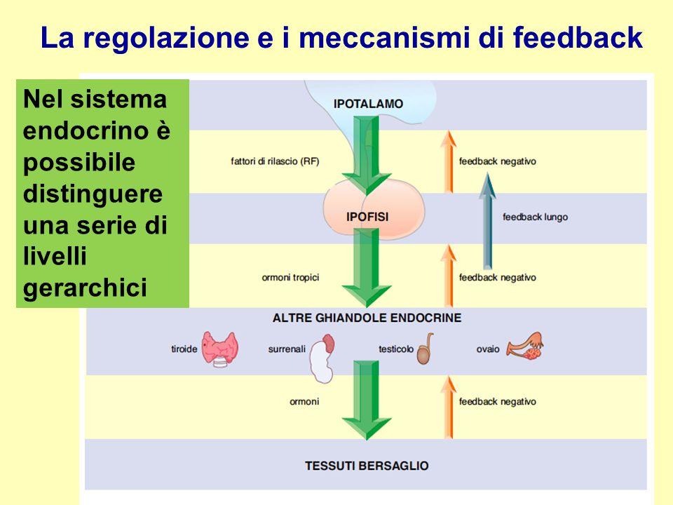 La regolazione e i meccanismi di feedback