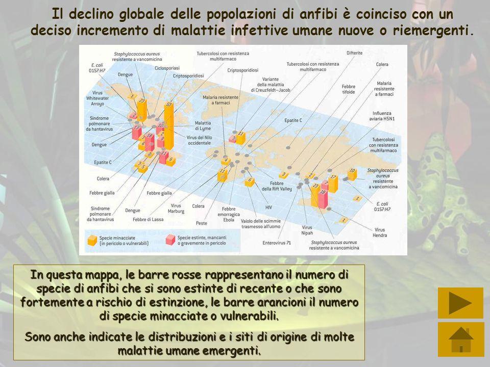 Il declino globale delle popolazioni di anfibi è coinciso con un deciso incremento di malattie infettive umane nuove o riemergenti.