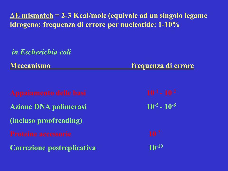 DE mismatch = 2-3 Kcal/mole (equivale ad un singolo legame idrogeno; frequenza di errore per nucleotide: 1-10%