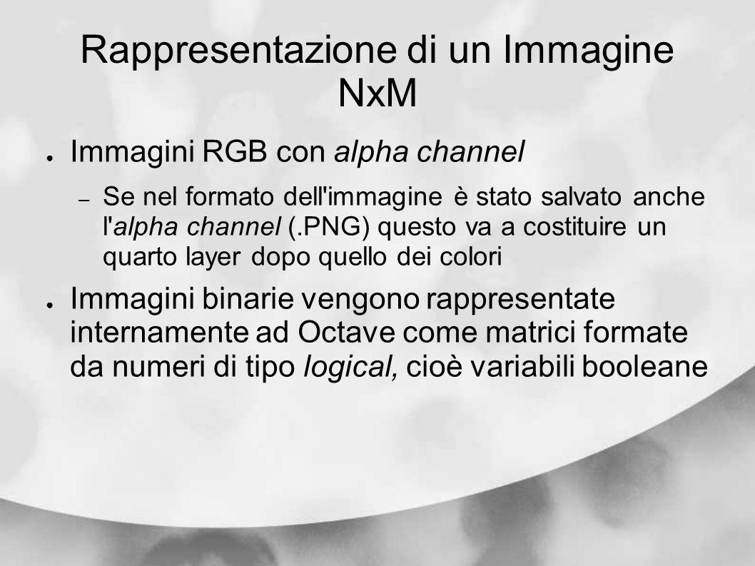 Rappresentazione di un Immagine NxM