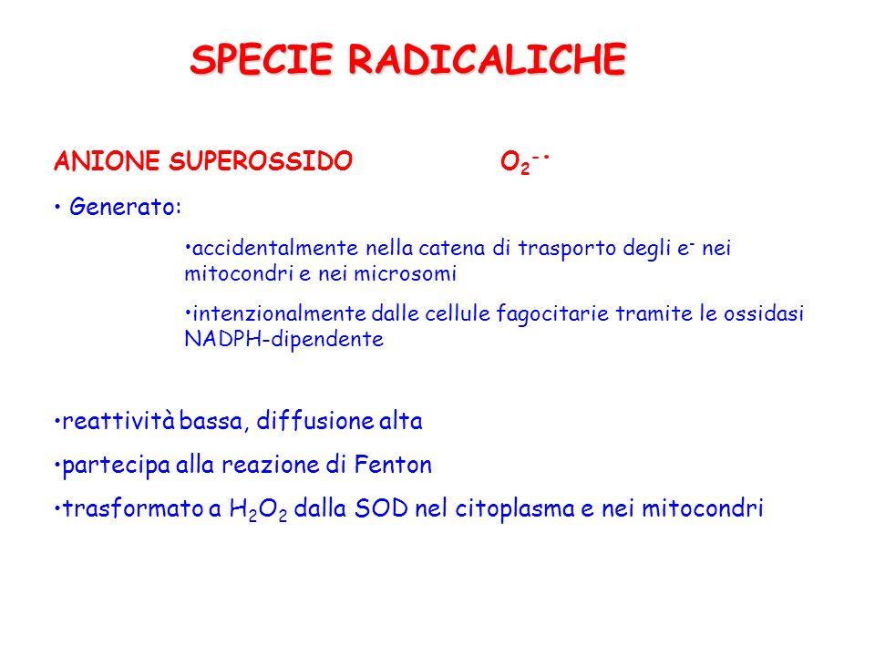 SPECIE RADICALICHE ANIONE SUPEROSSIDO O2-. Generato:
