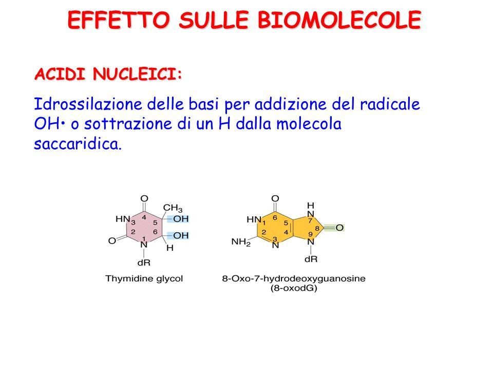 EFFETTO SULLE BIOMOLECOLE