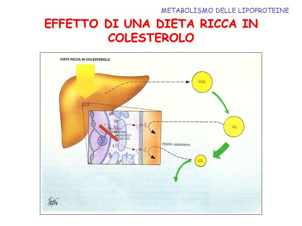 EFFETTO DI UNA DIETA RICCA IN COLESTEROLO