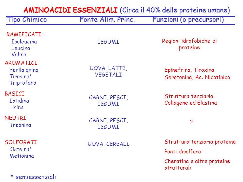 AMINOACIDI ESSENZIALI (Circa il 40% delle proteine umane)