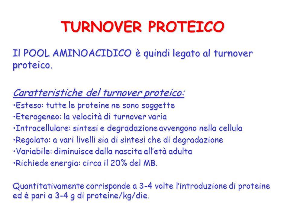 TURNOVER PROTEICO Il POOL AMINOACIDICO è quindi legato al turnover proteico. Caratteristiche del turnover proteico: