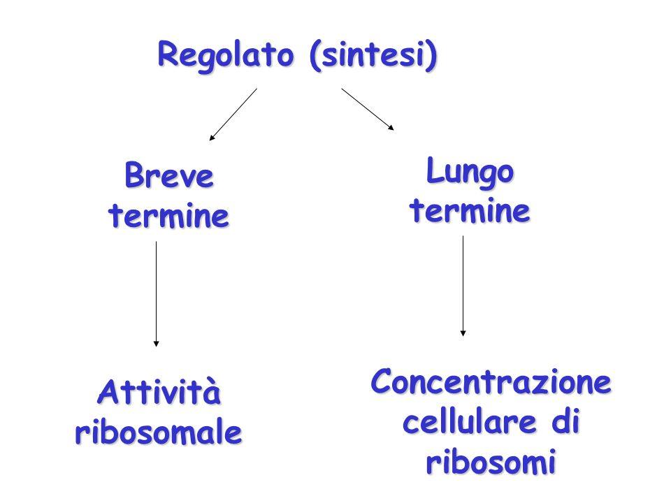 Concentrazione cellulare di ribosomi
